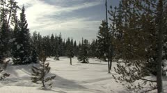 P02590 Winter Scene of Forest at Grand Teton National Park Stock Footage