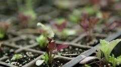 Seedlings in starter trays - rack focus - stock footage