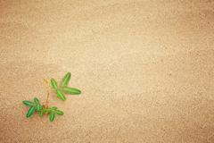green plant growing trough sand - stock photo
