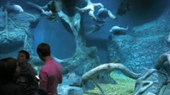Visitors admiring fishes swimming in watertank at Oceanarium Stock Footage