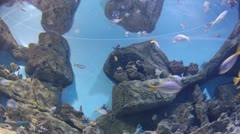 Many fishes and coral in watertank wide view. Timelapse Stock Footage