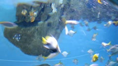 Many fishes swimming in watertank wide view. Timelapse Stock Footage