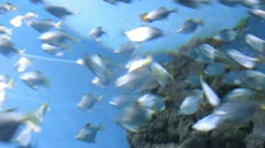 A fish shoal in watertank in light ray. Timelapse Stock Footage