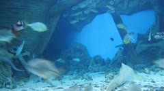 Old ship and a shoal of fishes in watertank. Timelapse - stock footage