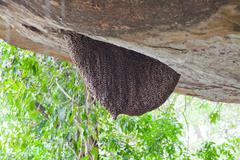 Honey bee swarm Stock Photos