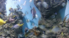 Few fishes swimming in watertank. Timelapse Stock Footage