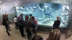 Visitors looking at fishes in a watertank Stock Footage