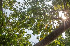 Tree with beams of sun Stock Photos
