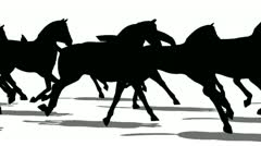 Silhouette of horses moving fast side view, loopable Stock Footage
