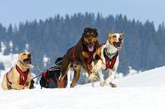 Sportive dogs Stock Photos