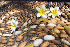 Flowers on a stone mosaic - Thailand, Phuket - stock photo
