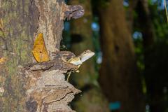 Lizard on a tree - Thailand, Phuket Stock Photos