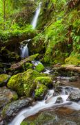 Stock Photo of creek in forest