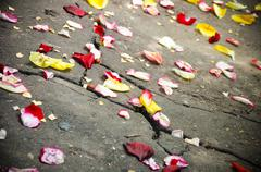 Scattering petal of roses on road Stock Photos