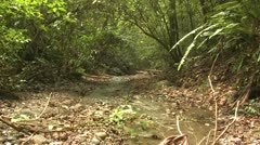 P02635 Small Stream in a Costa Rica Rain Forest Stock Footage