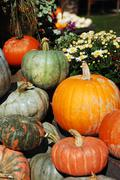 Decorative pumpkins and flowers Stock Photos