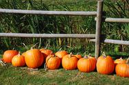 Pumpkin row Stock Photos