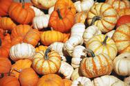 Pumpkin pile Stock Photos