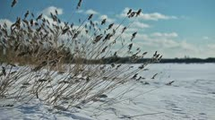 Yellow grass swaying in the wind on a frozen lake shore in winter season - stock footage