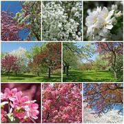 Blooming garden in spring Stock Photos