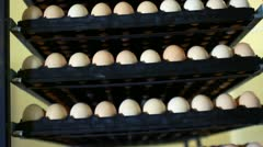 Rack with eggs in incubator at chicken farm. Rows of eggs at poultry farm Stock Footage