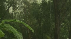 P02674 Hard Rain in the Rainforest in Costa Rica Stock Footage