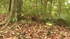 P02670 Zoom in on Poison Dart Frog in Jungle Stock Footage