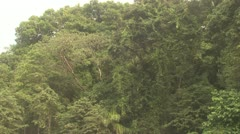 P02666 Central America Jungle Canopy Stock Footage