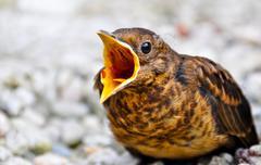 Screaming Bird Stock Photos