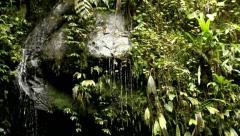 Wet rocks in cloud forest - stock footage