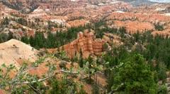 Bryce Canyon National Park. Utah, USA. - stock footage