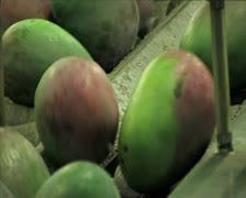 Mangoes fruit in packaging line15 Stock Footage