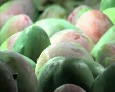 Mangoes fruit in packaging line 17 Stock Footage