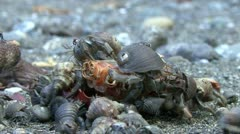 P02699 Hermit Crabs Feeding on Crab - stock footage