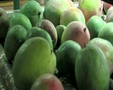 Mangoes fruit in packaging line 21 Stock Footage