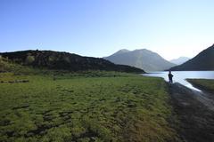 parque nacional conguillo chile - stock photo