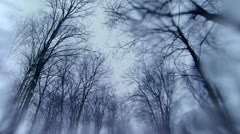 Winter treetops in snow, tracking with watery lens Stock Footage