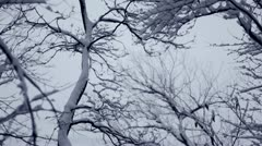 Looping video: Thick snow coating branches during snowstorm Stock Footage