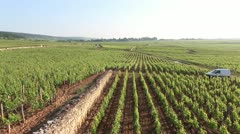 20100603-Nuits-Saint-Georges-vignobles-vineyard-grands-crus Stock Footage