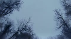 Winter treetops in snow, tracking with watery lens - stock footage