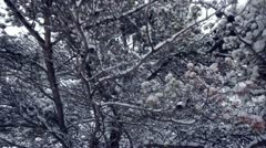 Forest snowfall - Vigorous wind shakes snowy branches Stock Footage