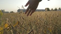 Running Fingertips Through Fall Crops - stock footage
