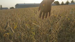 Walking Through Autumn Farm Field - stock footage