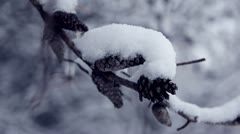 Snowy pinecones on branch during snowstorm Stock Footage