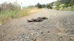 Road Kill Stock Footage