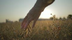 Running Fingertips Through Autumn Crops - stock footage