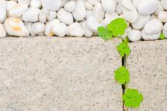 white pebble and newborn creeping oxalis leaf - stock photo