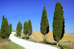 tuscany, cypress trees white road rural landscape, italy, europe. - stock photo