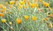 Yellow flowers. Stock Photos