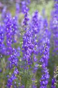 Purple flowers. Stock Photos